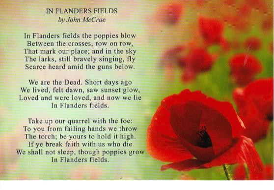 fields of poppys