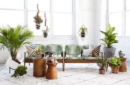 Plants and Sette