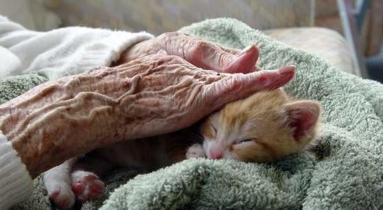 seniors and pets 3