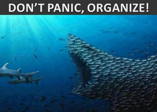 don't panic organize